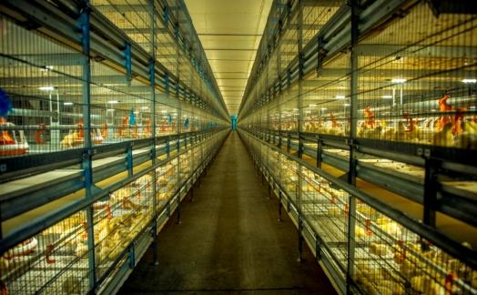 Холдинг «Русское Зерно Уфа» открывает новую птицефабрику «Ашкадарская»