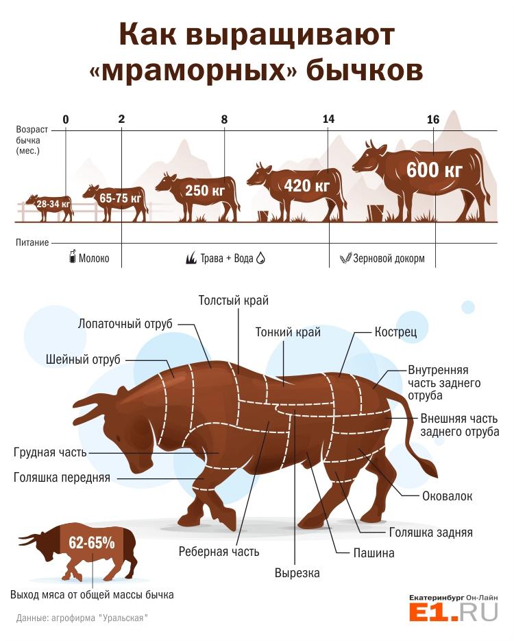 Чем кормить бычка в домашних условиях