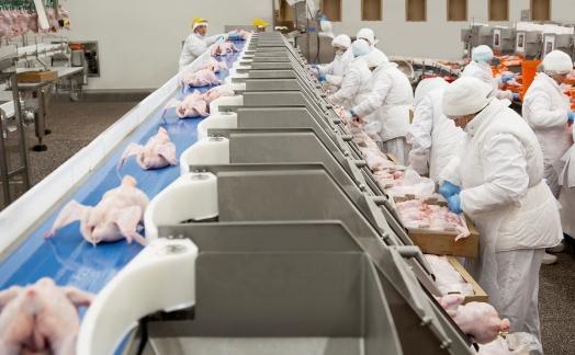 АПХ «Мираторг» увеличил суточное производство курятины с начала года на 40% процентов до 319 тонн
